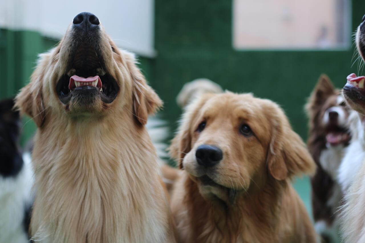 Dog Palace