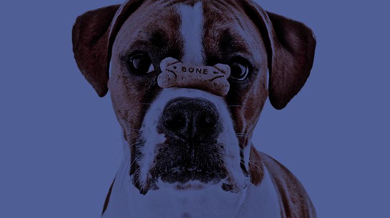 46-3-DOG-PALACE—News
