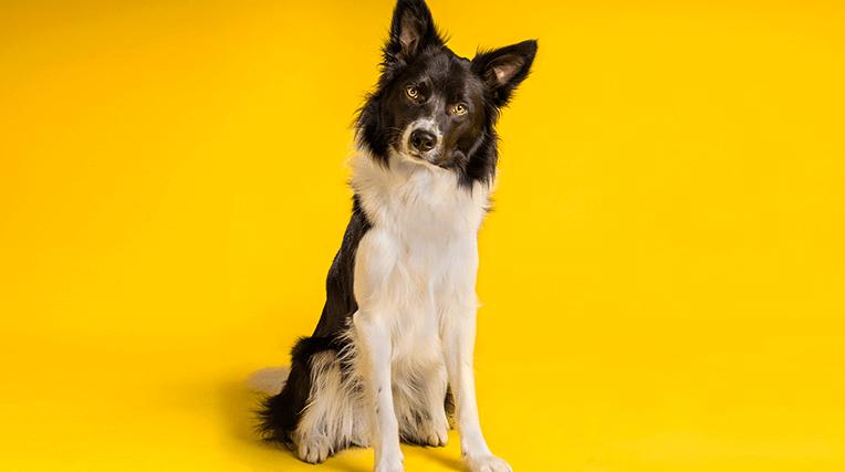 46-4-DOG-PALACE—Carrose_newsl (1)